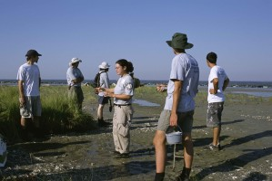 people, work, restoring, marsh, habitat