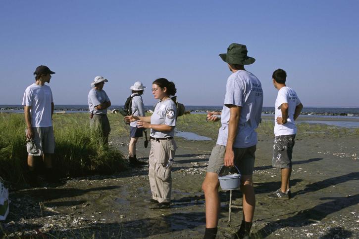 people, work, restoring, marsh, habitat