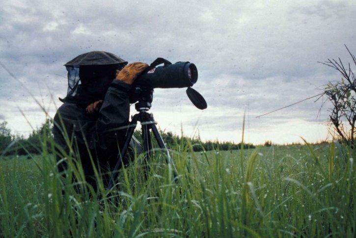 personnes, télescopique, appareil photo, capture, sauvage