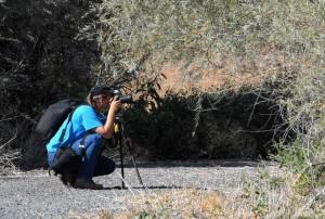photographe, photographie, faune