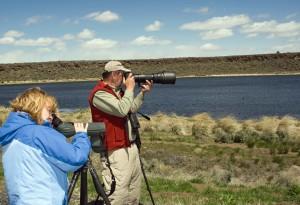 photographes, profiter, jour, la faune, la visualisation