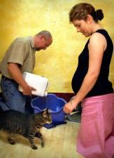 enceintes, femme, animal, chat, mari, processus, changeant, les chats, la litière