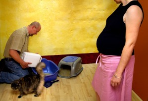 pregnant, woman, looking, husband, process, changing, kitty, litter
