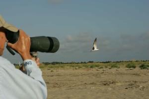 professionnel, photographe, captures, oiseaux, vol