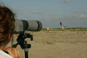 professionnel, photographe, captures, désert, appareil photo