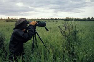 professionnel, photographe, télescopique, appareil photo, capture, monde vivant