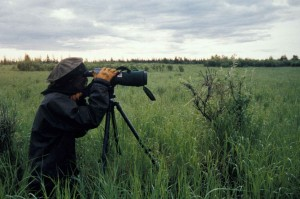 professional, photographer, telescopic, camera, captures, living, world