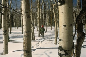 racchette da neve, selvaggia