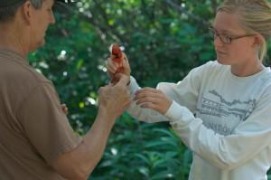 studente, mostrato, insegnante, in modo corretto, tenere, uccello, preparato, banding