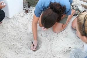 étudiant, soigneusement, marques, tortue, oeuf, notes, orientation, nid