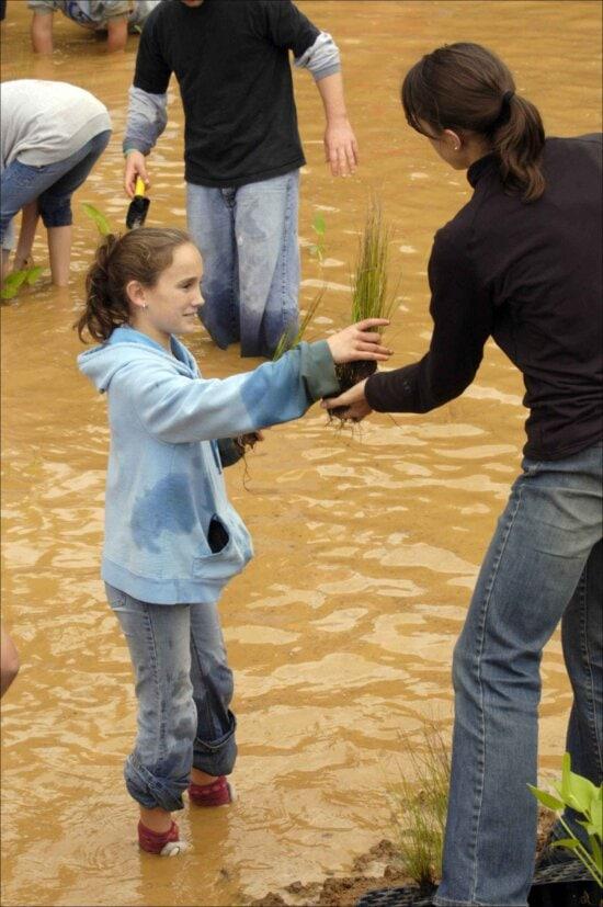 teacher, handing, student, wetland, plants, established, pond