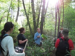 Team, diskutieren, Wald