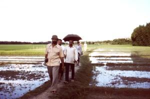 équipe, croisement, terre, crête, entre, le riz, les rizières