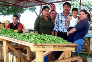família de membros, Araya, plantadas, gama, diferente, culturas, milho, sorgo