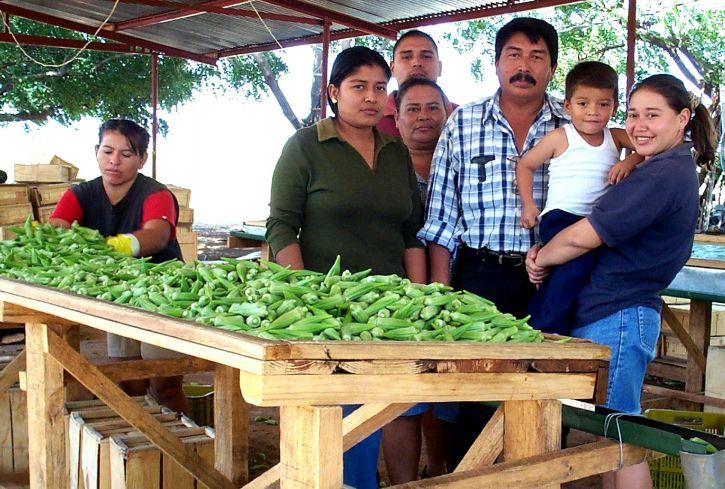 membres, Araya, famille, planté, gamme, différent, cultures, le maïs, le sorgho