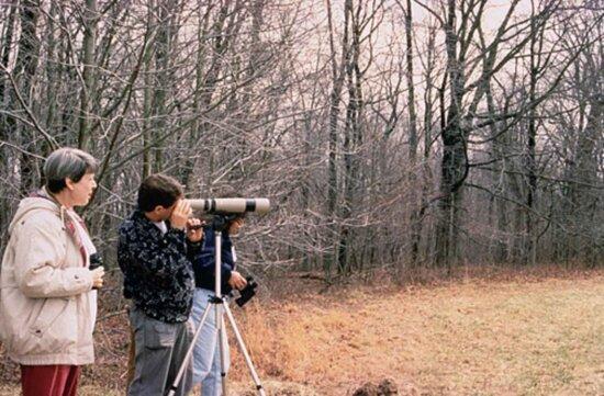 three, people, wildlife, birding, scope, binoculars