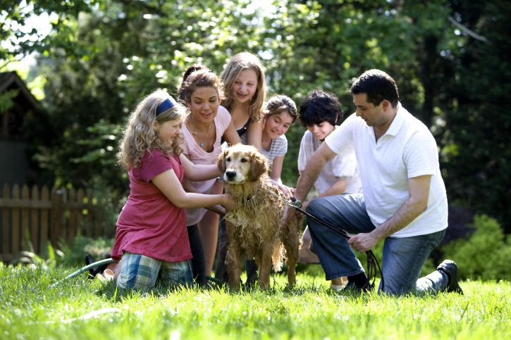 together, family, process, washing, Labrador, retriever, outside, fresh air