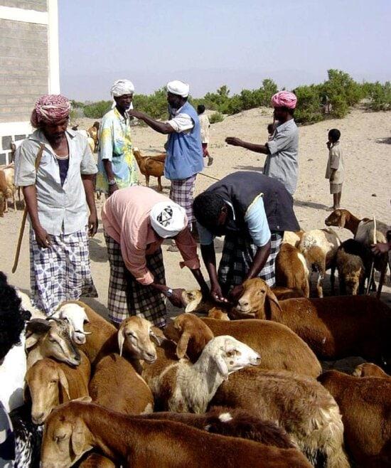 training, programs, livestock, health, needs, assist, goat, farmers, Eritrea