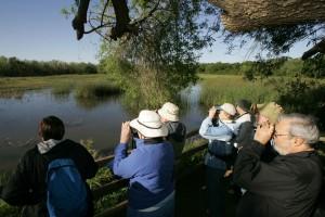 visitors, watching, favorite birds