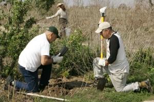 bénévoles, aide, replanter, papillon, jardin