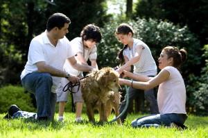 washing, furry, Labrador, retriever, dog