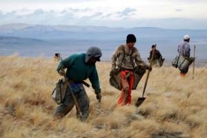 une traînée de poudre, l'armoise, la plantation, la réhabilitation