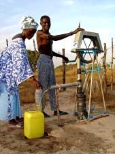 žena, ispune, vodu, kontejner, dan, riža, polja