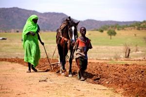 žena, plugova, polje, konj, Beida, Chad