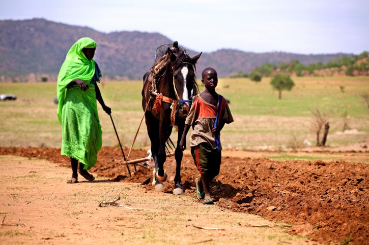 woman, plows, field, horse, Beida, Chad