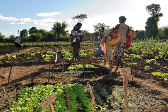 women, maintaining, vegetable, gardens
