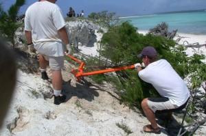 arbetstagare, special, metall, verktyg, rötterna, träd, undervegetation