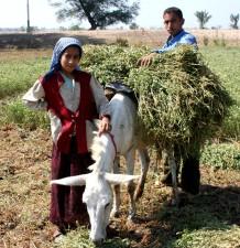 jeunes garçon, fille, récolte, ferme, cultures