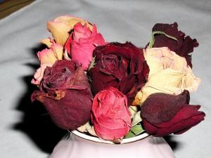 hrpa, ruže