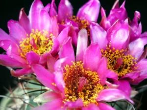 cactus, fleurs, studio