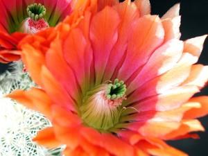 Kaktus, Bild, Studio