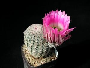 cactus, photo