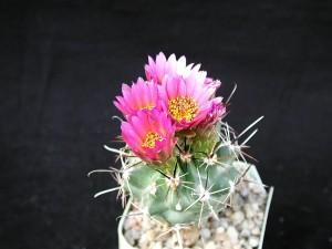 desierto, cactus, fotógrafo, estudio