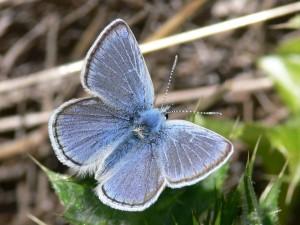borboleta, macro, foto