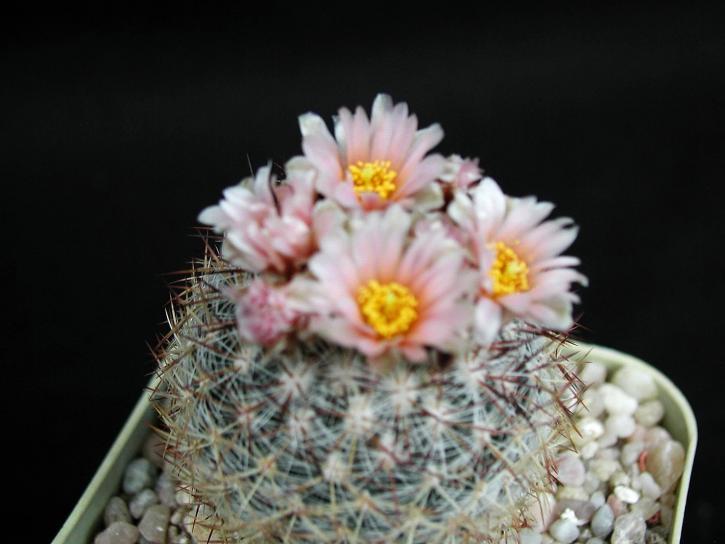 cactus, photographie