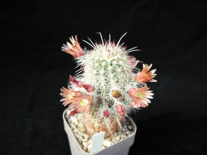 cactus, macro, objet, photo