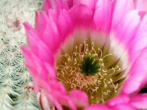 cactus, macro, l'image