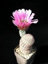 cactus, objet, studio