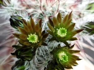 closeup, cactus