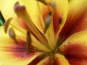 flower, up-close, macro