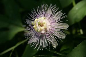 flor, macro, flora, fotografía