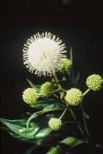 cvijet, makronaredbe, fotografija