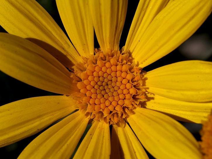 flower, petals, macro