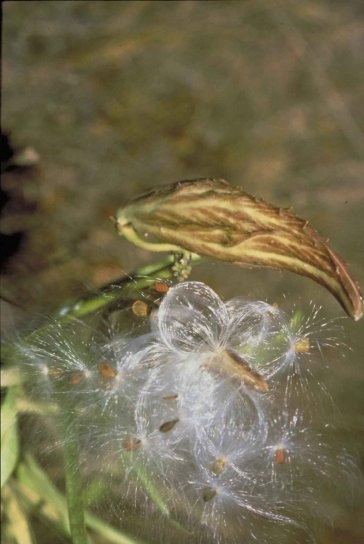 macro, flora, photography