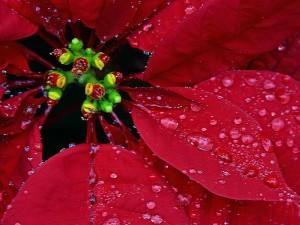 macro, flower, dews