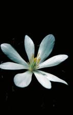 macro, fotografia, fiori